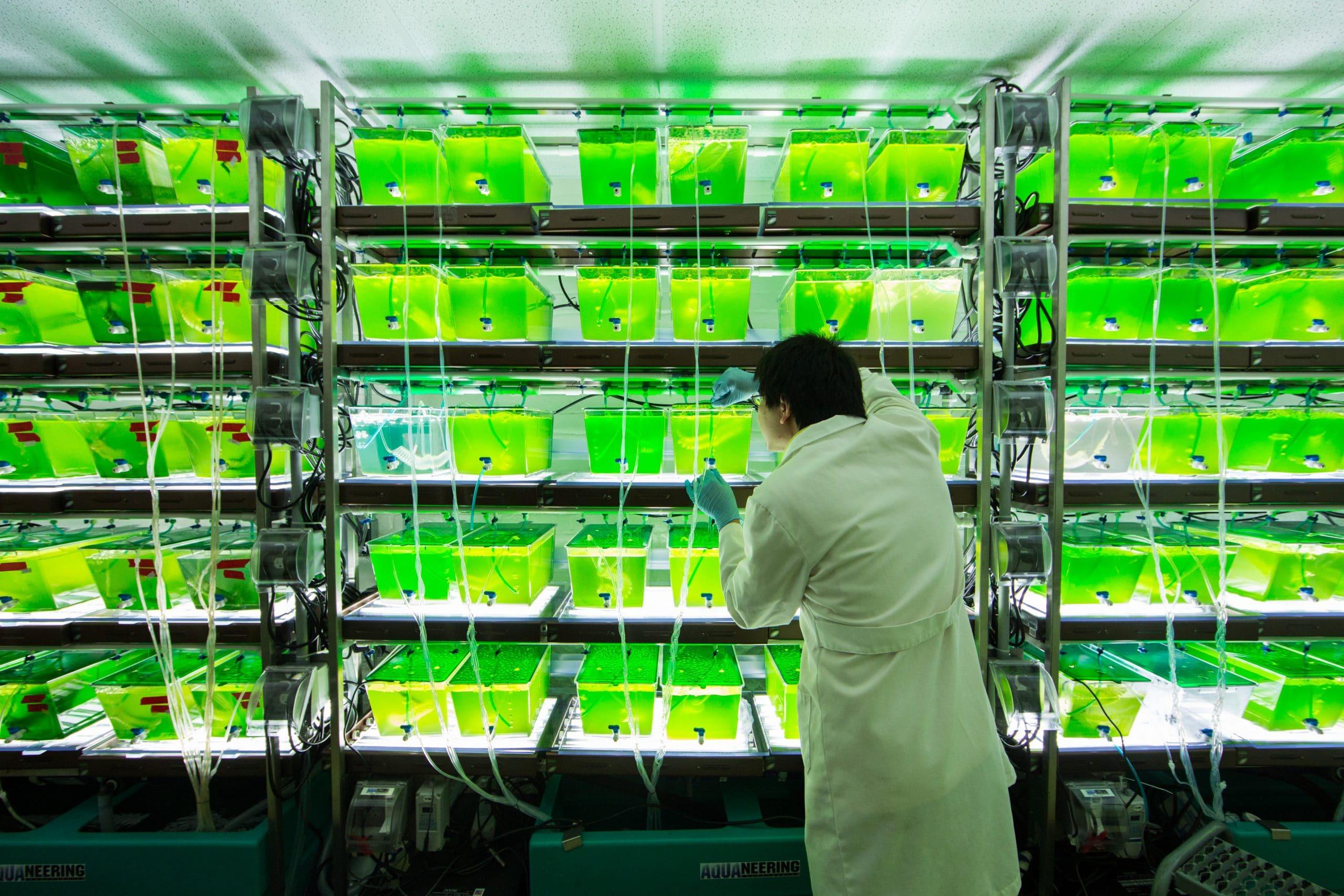 algae27