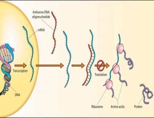 The Theory Behind Antisense Oligonucleotide Therapy